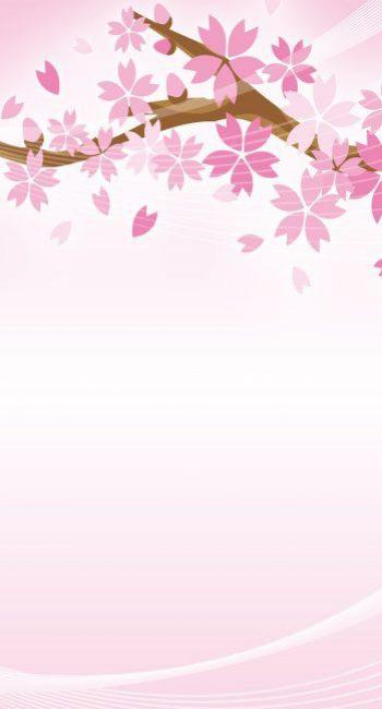 sakura-blossoms-klein